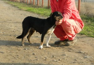 Cara after being rescued